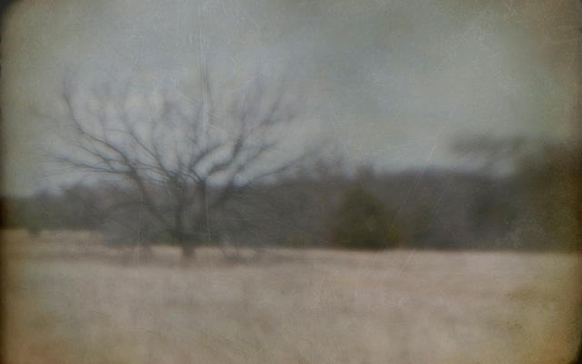 tree with limbs blur copy