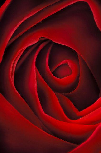 rose is a rose