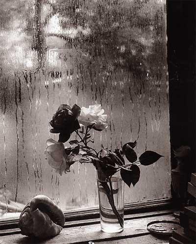 sudek, last roses