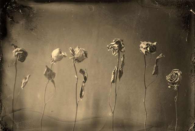 david-john-lotto-6-roses